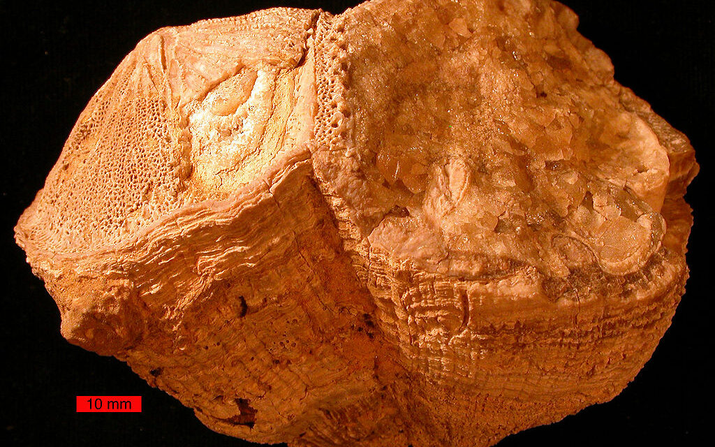 Ancient shells reveal Earth days were shorter 70 million years ago