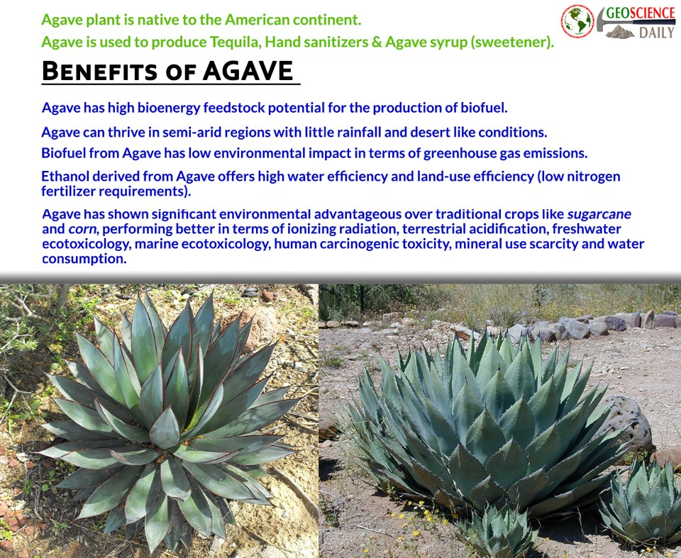 Benefits of Agave plant