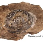Earliest dinosaur eggs were soft-shelled, new study reveals